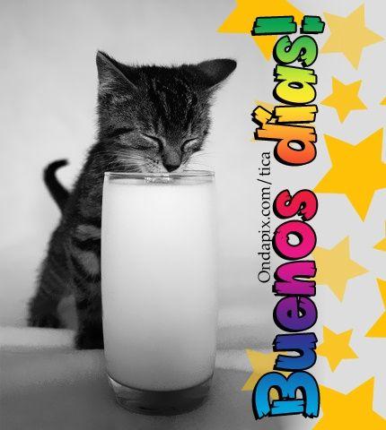 Buenos dias #saludos #animales #gatos