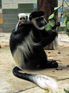 Mitoslavia: Małpy