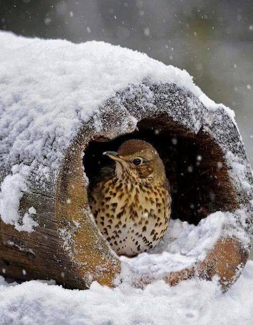 ... @ivannairem .. https://tr.pinterest.com/ivannairem/winter-snow-frozen/                                                                                                                                                      More
