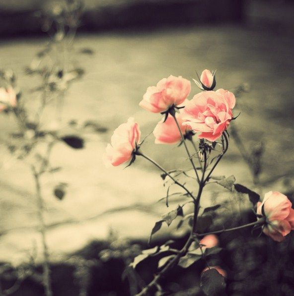 Vintage Flowers Tumblr Photography - Flowers : Tree of ...