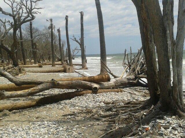 Shell Island Edisto Beach South Carolina