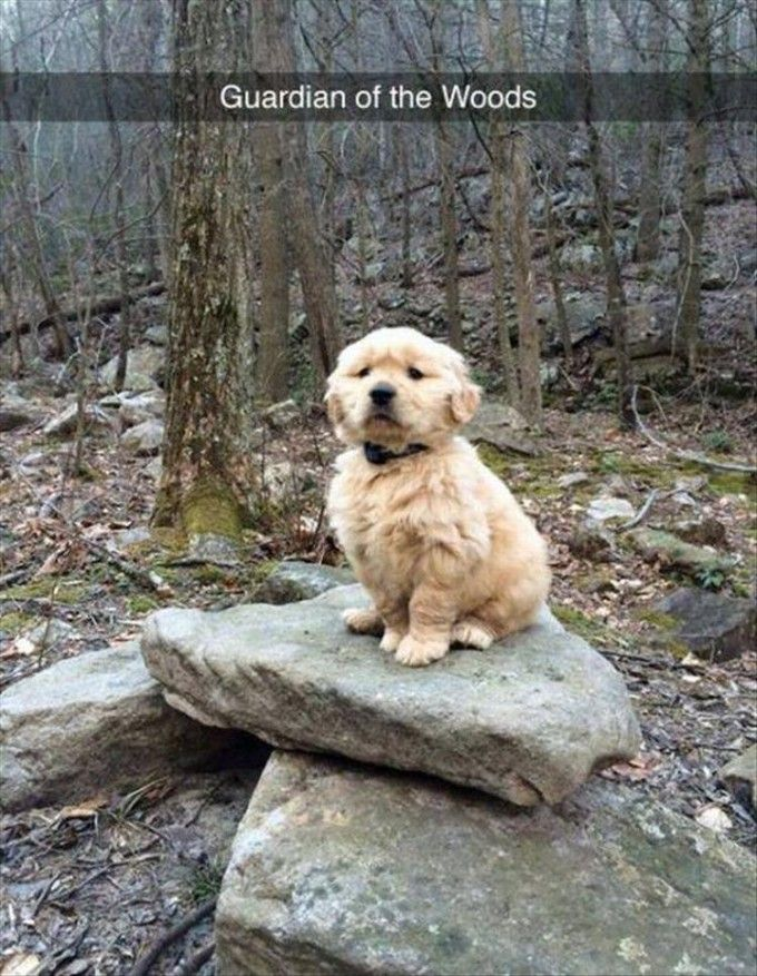 funny animal pictures | dog | forest