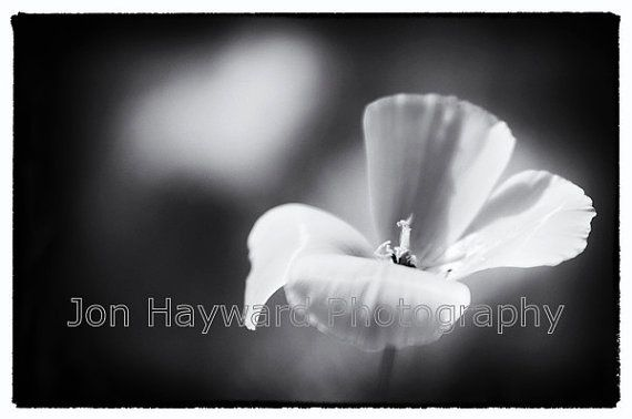 A beautiful, simple but compelling semi-macro black and white image of a single flower.  Printed on premium quality heavyweight 100% cotton rag