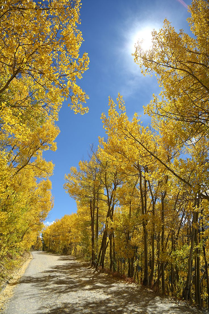 28 best fall colors in breckenridge images on pinterest for Planning colorado vacation