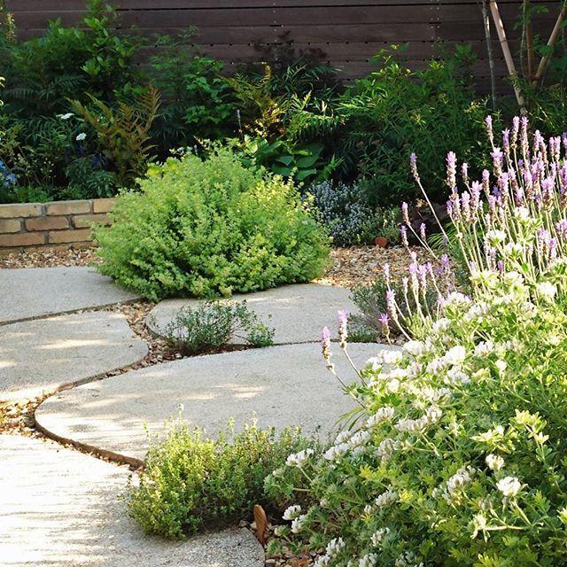 外は暑くても、眺めは涼しげ。これぞ、植物のちから。#ザシーズン #ガーデン #庭 #ラベンダー #アプローチ #カモミール #ローズマリー #シーズン柏の葉 #デザイナー #松本直子 #garden #designer #photo #green #love #natural #gardendesign #japan #緑のある暮らし