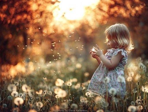 * Portrait, child, photography, dandelions, girl, toddler, golden sun