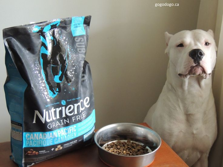 Health and wellness are keywords for Bain and I next year, so I have recently started Bain on a new diet with Nutrience SubZero®.  A grain-free, no bad anything, high quality dog food that is sure to make your pooch drool over!   Made right here in Canada