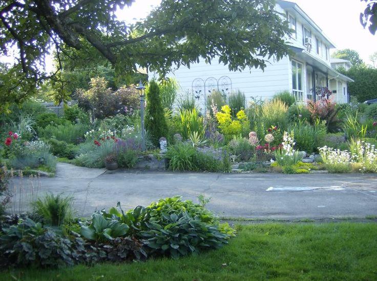 Front flower bed in June / plate-bande avant en juin  ( salvia superba, cottinus Golden Spirit, Berberis Rose Glow, allium christophii, wild daisies, phlomis tuberosa, etc.)