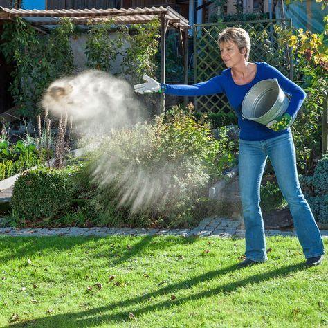 Moos dauerhaft entfernen: So wird Ihr Rasen wieder schön – SANNE