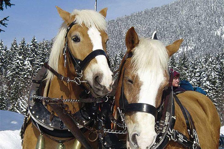Arabella Alpenhotel am Spitzingsee, Schillersee - Oberbayern.