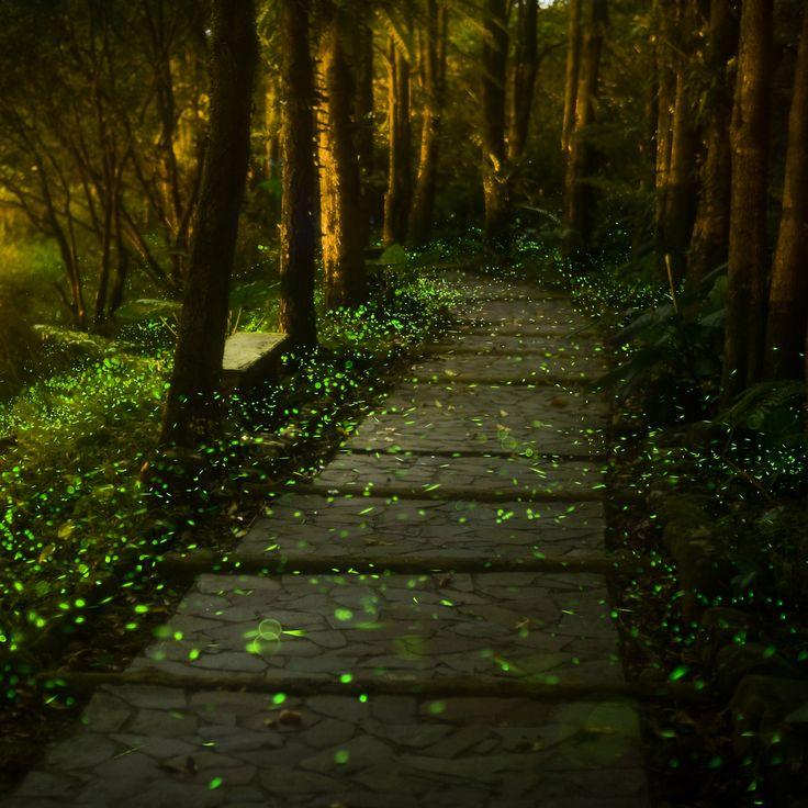 Conoce los santuarios de las luciérnagas alrededor del mundo. (Foto del Parque Nacional Allegheny, Pensilvania) Definitivamente quiero ir!!!! Que lugar tan lindooooo