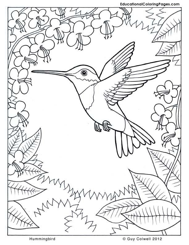 coloring pages hummingbirds   Hummingbird coloring, flower ...