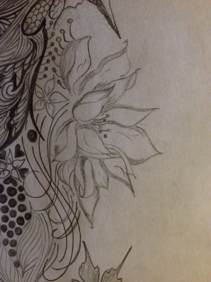 Lotus Flower Pencil Dr Flowers Drawings In