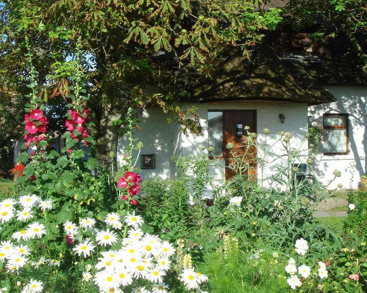 Garden Cottage a midst the Hollyhocks and Daises.