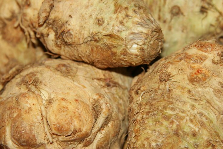 Celeriac roots ready for preparation