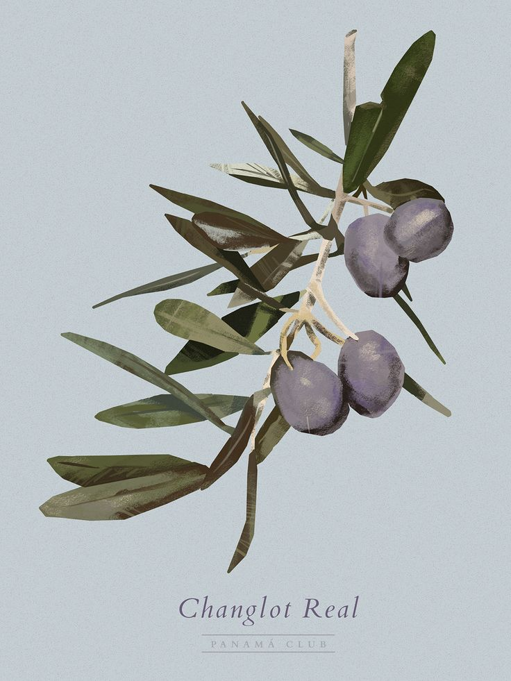 We ilustrated the diferentt olive varieties during an olive oli tasting event and we made interventions on walls and slates.