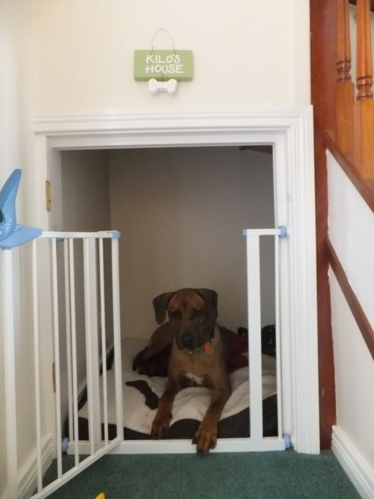 Best 25 Dog Under Stairs Ideas On Pinterest Dog Bed Stairs Under Stairs Dog House And Dog Rooms