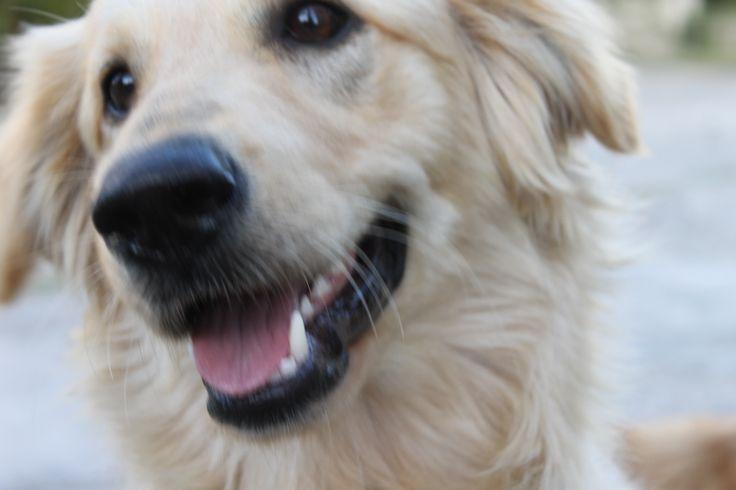 modelo perro