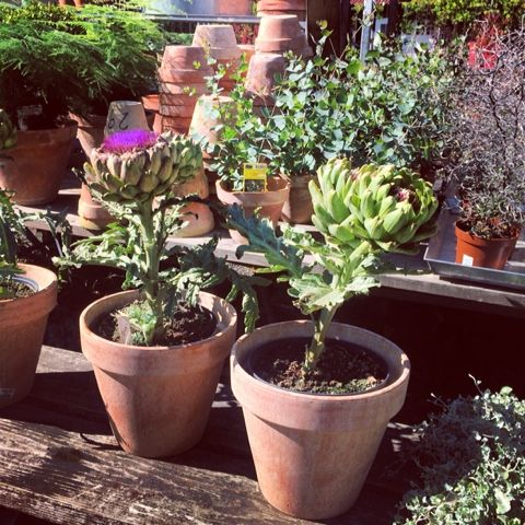 90 Best Images About Greenhouses And Potting Sheds Auf Pinterest ... Gartengerate Und Gartenzubehor Tipps Zur Aufbewahrung Pflege