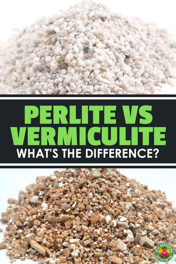 Perlite vs. Vermiculite: What's the Difference?