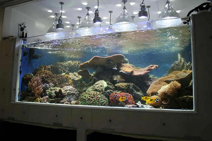 Reef live reef live pinterest for Live saltwater fish