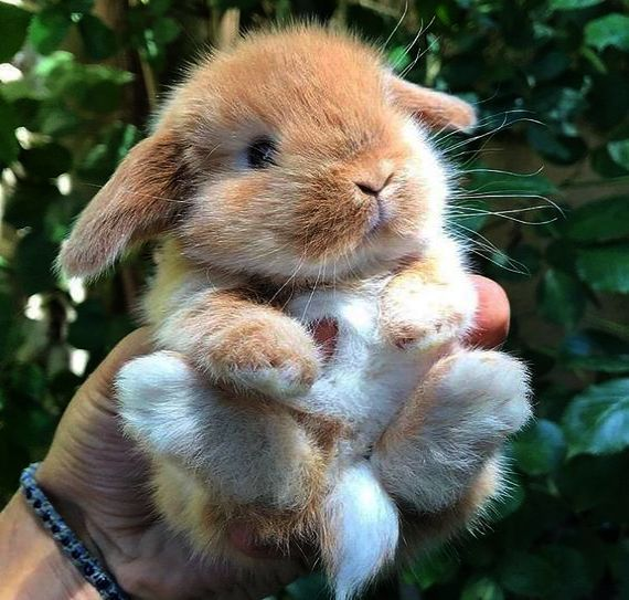 Cute Drawing Of Animals Easy Rather Cute Animals Video Free Download Out Cute Baby Animals Bunny Next Cute Baby Bunnies Cute Funny Animals Cute Little Animals