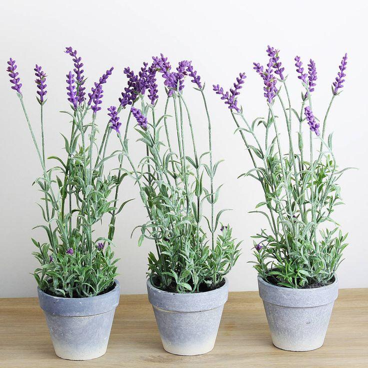 Yatak Odanıza Bu 4 Bitkiyi Koyarsanız Uykusuzluktan Ve Uyku Apnesinden Kurtulursunuz - Hayat Bilgileri