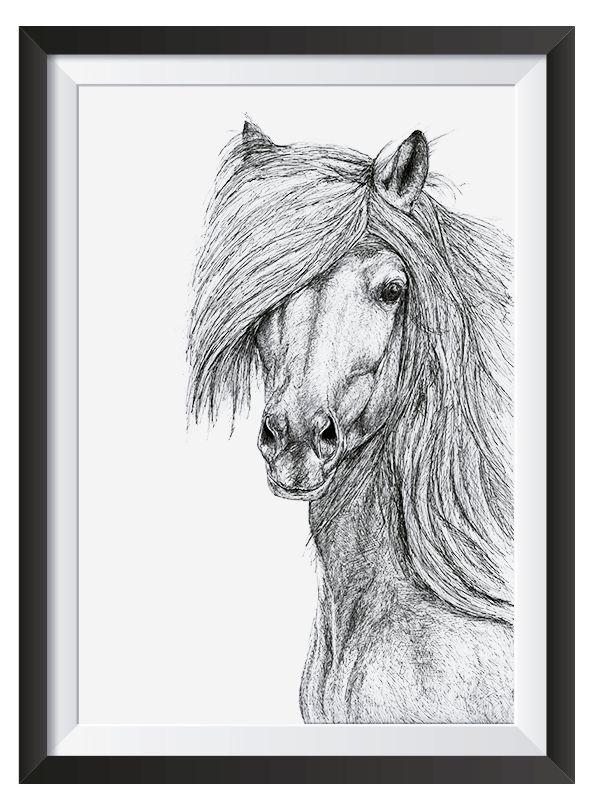 Horse illsutrated in with Pen by Nicoll van der Nest