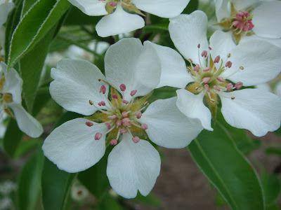 unbrivido: Alberi in fiore ...