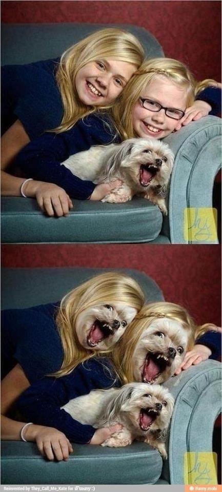 Angry dog lol