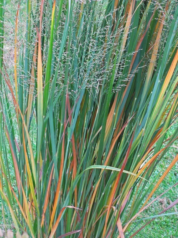 25 best ideas about grass edging on pinterest grass for Ornamental grass edging