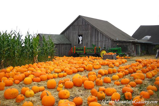 Halloween & Pumpkin Season - Half Moon Bay - San Mateo County Coastside
