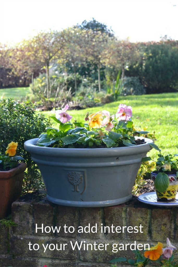 Low-effort tips and ideas for enhancing your Winter garden to provide maximum interest during the colder months.