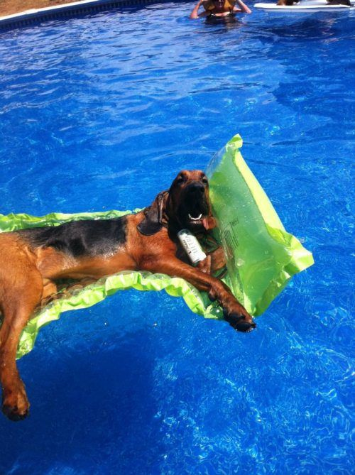 Funny animals : theCHIVE