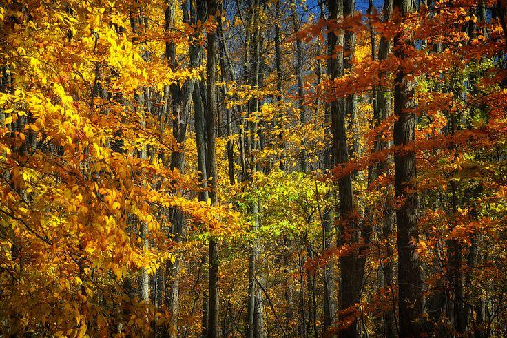 Fall Colours, Waterloo Ontario   Flickr - Photo Sharing!