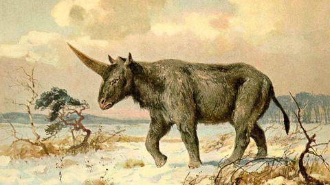 Jednorožci podle vědců opravdu chodili po Zemi, a to před 29 tisíci lety. Nové poznatky dokládá objev lebky v Kazachstánu.