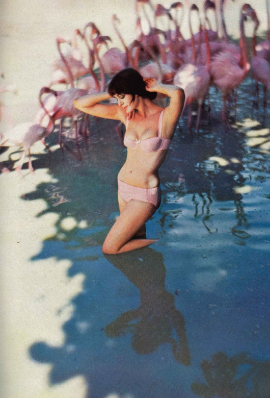 Carmen Dell'Orefice surrounded by flamingos wearing a bikini | Photo taken in the 1950's in the Bahamas by Norman Parkinson | Vogue 1959