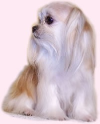 the next dog breed i want is going to be a mi-ki
