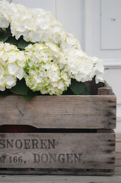 Rustic wood crate juxaposed with delicate hydrangeas
