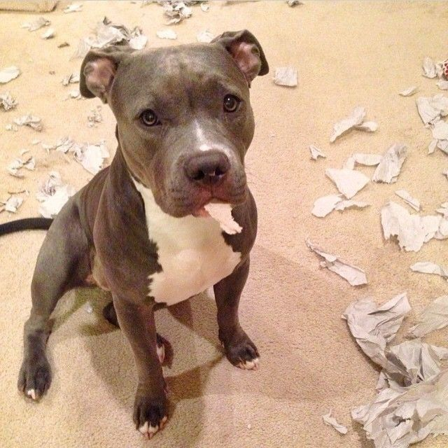 Criminal Names For Dogs