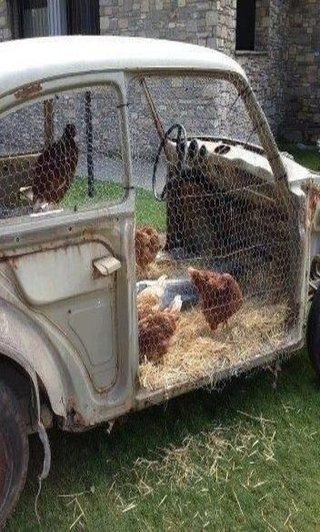 Chickens in an old car                                                                                                                                                      More