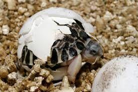 dieren uit een ei - Google zoeken