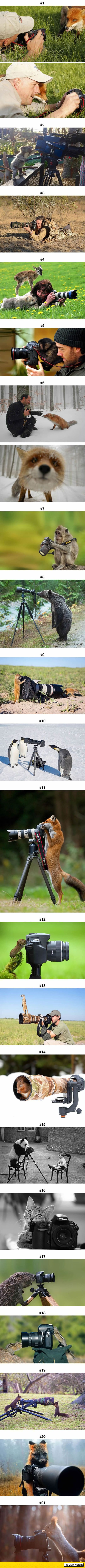 Animals That Want to Be Photographers