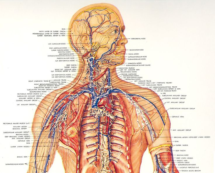 Этот комплекс способствует стимуляции сосудистых стенок, что повышает их тонус и тем самым улучшает кровоток.  1.Лежа, руки вытянуты вдоль туловища, ноги прямые. Медленно вдохнуть через нос, выдох —…