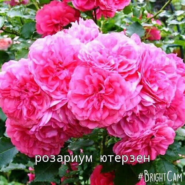 Очень хочется увидеть вживую цветущий куст