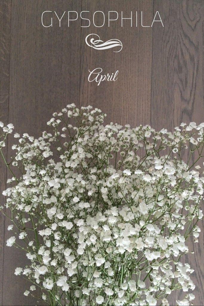 "Gypsophila is also called ""baby breath"" - Wedding Bouquet in Paris"