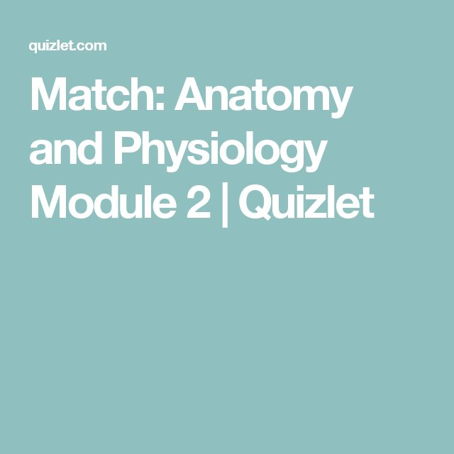 27 best nursing school images on pinterest nursing schools match anatomy and physiology module 2 quizlet fandeluxe Choice Image