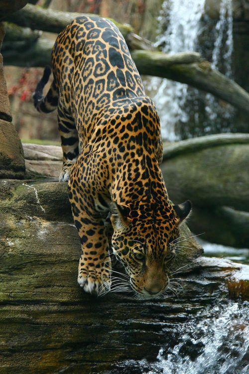 beauty-belleza-beaute-schoenheit: via Imgfave… – lady-rs-blog – *** LIONS & CATS **