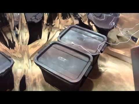 Marijuana Growroom Setup - Blue Cheese Feminised