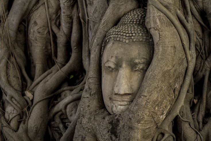 This Buddhist Parable Can Ease Your Suffering During a Crisis | #Buddhism #Mindfulness